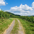 Path leading through vineyard landscape — Stock Photo #7213234