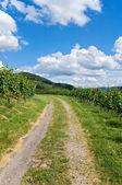 领先的通过葡萄园景观的路径 — 图库照片