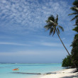 Stock Photo: Palm tree on tropical whites sand beach