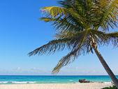 Palm tree on tropical whites sand beach — Stock Photo