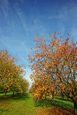 Colorful autumn trees in green field — Stock Photo