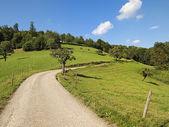 在夏季通过绿色草原领先的路径 — 图库照片