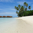 White sand beach and palm trees — Stock Photo