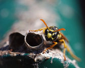 Wasp protects the house — Stock Photo