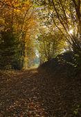 Path through autumn forest landscape — Stock Photo
