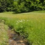 Forest creek running through grass land — Stock Photo #7492476