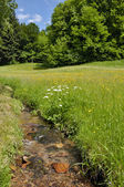 Forest creek running through grass land — Stock Photo