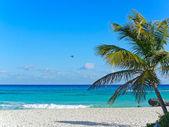 Palm tree on white sand beach — Stock Photo