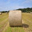 Hay bale in rural field — Stock Photo