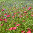 Field of wild flowers — Stock fotografie
