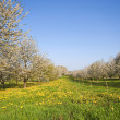 Beautiful spring meadow — Stockfoto