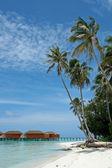 Tropik ada beach palm ağaçlar — Stok fotoğraf