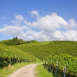 Stock Photo: Curved path leading through vineyard landscape