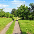 Summer landscape with green grass, road and trees — Stock Photo