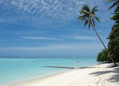 Palm tree on tropical island beach — Stock Photo