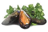 Fresh mussel — Stock Photo