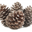 Stock Photo: Pine Cones and Needles
