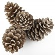 Pine Cones and Needles - 图库照片