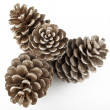Pine Cones and Needles - Foto Stock
