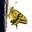 Butterfly — Stock Photo #7204427