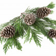 Pine Cones and Needles — Stock Photo #7206924