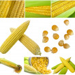Set of different corn images — Stock Photo