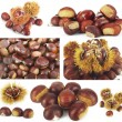 Chestnut colage — Stock Photo #7208432