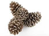 Pine Cones and Needles — Foto Stock