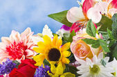 Colorful flowers — Foto de Stock