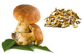Boletus edulis porcini mushroom — Stock Photo
