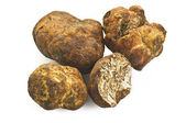 White truffle — Stock Photo