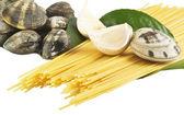 Live clams with spaghetti — Stock Photo