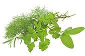Sage ,parsley,rosemary,wild fennel — Stock Photo