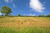 Landscape of Bales — Stock Photo