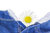 Daisy go out from jeans — Stock Photo