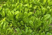 Garden Fresh Vegetables i — Stock Photo
