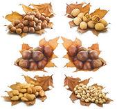 Nuts concept — Foto de Stock