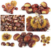Chestnut colage — Stock Photo