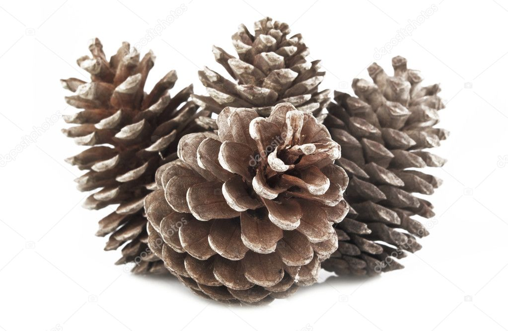 Pine Cones and Needles on white  Stock Photo #7203655