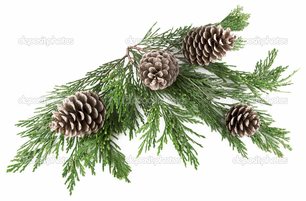 Pine Cones and Needles on white — Stock Photo #7206924