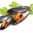 Black mussels — Stock Photo