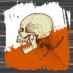 Skull vector — Stock Vector
