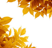 Autumn leaves over white, fall season — Stockfoto