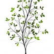 Young vector tree over white — Stock Photo