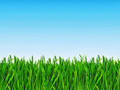Fresh grass isolated on a blue sky — Stock Photo