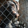 Brown dog locked in cage — Stock Photo #6922859