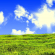 Meadow and lone tree with sun and clouds background — 图库照片
