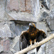 Stock Photo: Eagle on a branch