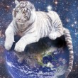 Stock Photo: White tiger siting on Earth