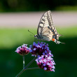 Butterfly — Stock Photo #6932878